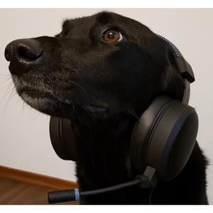 Radio FS1 Dancefox