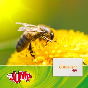 Podcast MDR JUMP Umschau Quicktipp